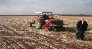 سورية: زراعة أكثر من 12 ألف هكتاراً بالمحاصيل الشتوية..والنسبة الأكبر في دمشق
