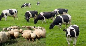 الزراعة: ألف قرض لمربي الثروة الحيوانية بقيمة 70 مليون ليرة