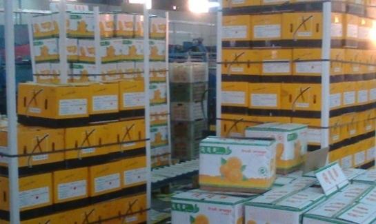 مسؤول:70 ألف طن حمضيات خرجت من التصدير بعد إغلاق العراق للمعابر منذ شهرين