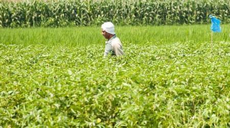 مسؤول: مصر تستهدف زيادة صادراتها الزراعية إلى روسيا 15% في 2016