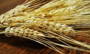 احتياطي القمح الاستراتيجي لمصر يكفي حتى منتصف نيسان