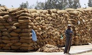 مصر تشتري 295 ألف طن من القمح الروسي والاوكراني والروماني للشحن في 1-10 اكتوبر