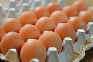 مسؤول: ارتفاع أسعار البيض في سورية أمر طبيعي!