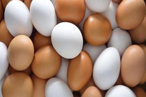 سعر البيض ينخفض لما دون التكلفة.. والمنتجون يسعون لتصديره إلى العراق