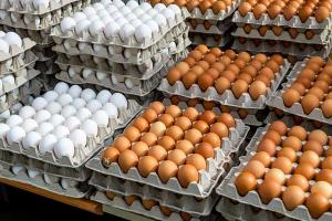صحن البيض ينخفض 500 ل.س.. الألبان و الأجبان تستقر و المواطنين متخوفين من إرتفاعها مع أول أيام رمضان