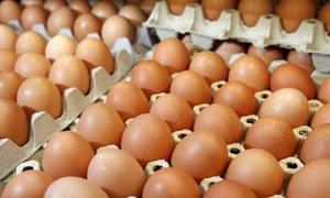 4 أسباب لإرتفاع أسعار الفروج والبيض في سورية..فماهي؟