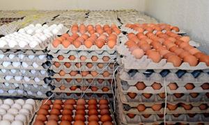 لعدم وجود فائض في الإنتاج..سورية توقف تصدير بيض المائدة