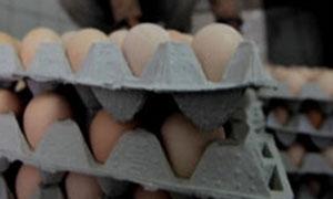 47.3 % تراجع في صادرات القطاع الخاص من بيض المائدة