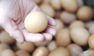 صحن البيض  يرتفع ارتفاعاً جنونياً مسجلاً 450 ليرة..وسعر البيضة الواحدة بـ 15 ليرة