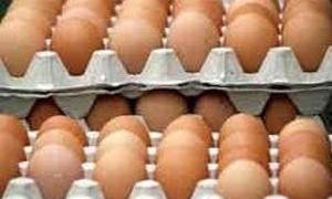 تراجع حاد بإنتاج البيض الى ملياري بيضة في العام الماضي مقارنة بـ3.8 بالعام 2011