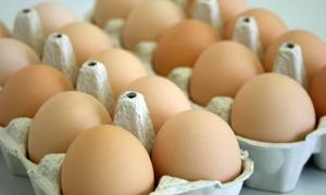 مدير عام الدواجن: 21 مليون بيضة نسبة الزيادة المخططة لها للموسم القادم
