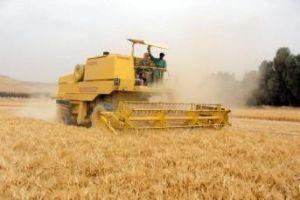 الحكومة توافق على إعفاء الفلاحين من براءة الذمة عند تسـويق الحبوب