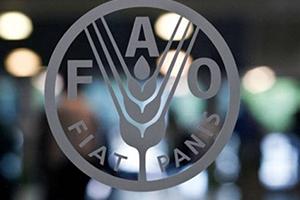 الفاو: تراجع أسعار الغذاء العالمية في تشرين الأول الماضي