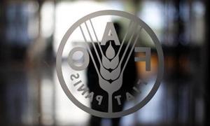 الفاو تتوقع مزيدا من التراجع لإنتاج القمح السوري في 2013