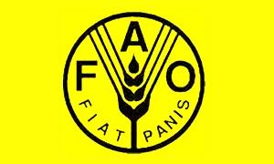 الفاو تخفض توقعاتها لمحاصيل الحبوب العالمية  بنسبة 2.7% في 2013