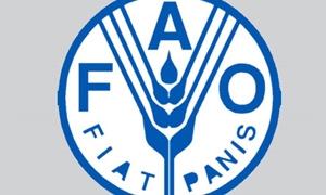 الفاو تقدم مساعدات عاجلة للاحتياجات الغذائية في سورية بقيمة تتجاوز 7 ملايين دولار