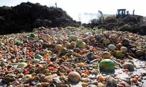 منظمة الفاو: تريليون دولار قيمة فاقد الغذاء في العالم سنويا