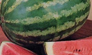 400 و600 ألف طن سنويا انتاج سورية من البطيخ