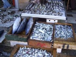 لا شيء رخيص في سورية.. أسعار السمك