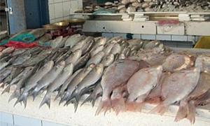 اسواق السمك في دمشق تنتعش بعد ارتفاع أسعار اللحوم والفروج.. وسمك السلطان ابراهيم بـ350 ليرة