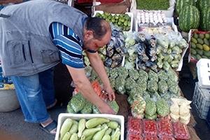 الملوخية والبامية أسعارها تتضاعفت.. السوريون أمام معاناة مونة الشتاء من جديد ولا حلول