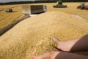 سورية تستورد مليون طن من القمح الروسي