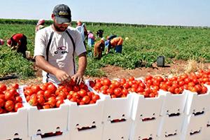 16 مليار دولار خسائر القطاع الزراعي في سوريا منذ 2011