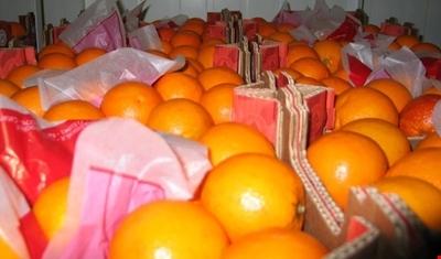 الاقتصاد:فرصة متاحة أكثر من أي وقت لدخول منتجاتنا الزراعية إلى السوق الروسية
