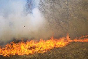 خلال أسبوع.. إخماد 225 حريقاً وتضرر أكثر من 15 ألف دونم من المحاصيل الزراعية