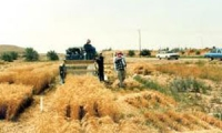 الحكومة تطالب الجهات العامة بإبلاغ مؤسسة الحبوب عن عقودها مع شركة تريغو