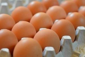 غرف الزراعة: الفرد في سورية يستهلك 154 بيضة سنوياً فقط!