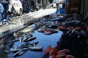 سوريا: الحرب أدت لانخفاض شعور الأسماك بالأمان.. وجمعية الصيادين توضح