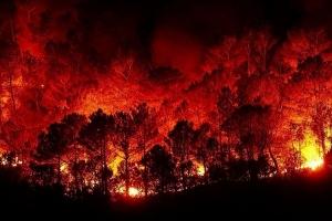 اتحاد الفلاحين: التعويض فقط للمتضررين من الحرائق التي حصلت بفعل حرارة المناخ