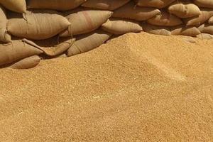اتحاد الفلاحين: نعمل لتوفير مستلزمات القمح ويجب استلام كل حبة