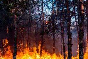 نحو 20 ألف دونم التقديرات الأولية لأضرار حرائق الغاب