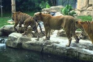 دمشق: إعادة افتتاح حديقة الحيوانات في العدوي ورسم الدخول 200 ل.س