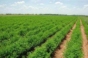 زراعة ريف دمشق: استلمنا فقط 13 مليون ليتر من إجمالي 40 مليوناً الحاجة