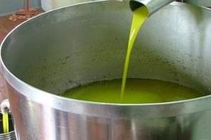 الزراعة: البرد والمطر سبب قلة ناتج الزيت من عصر الزيتون