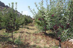 بالأرقام..الزراعة توضح حجم تعويض أضرار المزارعين في المحافظات السورية