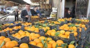 أسعار الحمضيات تنخفض لأقل من التكلفة..والمزارعين يتوقفون عن تسويق محاصيلهم