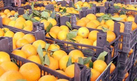 اتفاق روسي سوري لتصدير المنتجات الزراعية لروسيا