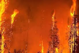 أكثر من 400 حريق حراجي في سورية منذ بداية العام