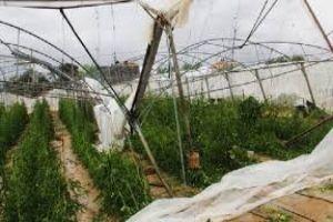 بسبب الإعصار..خسائر على مساحة 18 دونم وتدمير 45 بيت بلاستيكي في طرطوس