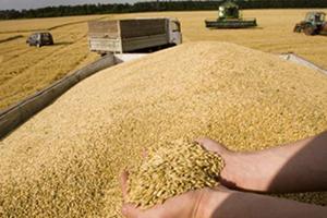 روسيا تتربع على عرش القمح في العالم