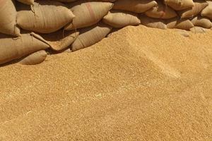 سوريا تدرس خيارات لتمويل مشتريات القمح الروسي