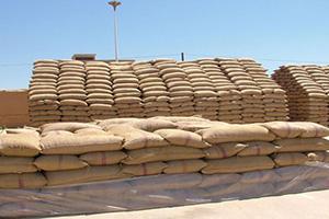 مؤسسة الحبوب تستلم 98 ألف طن من القمح