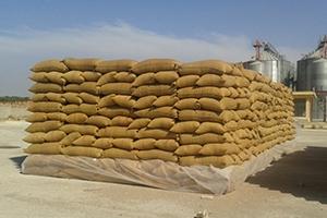 بعد الـ 2500 طن.. العثور على 3 آلاف طن من القمح المسروق بريف حماة