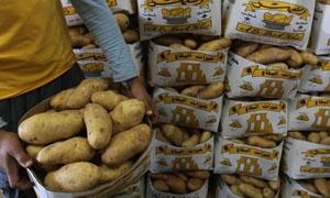 كشتو:توقعات بإنتاج 500 ألف طن من البطاطا في 2015