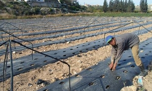 تراجع المتساقطات يربك القطاع الزراعي..و تزايد أعباء المزارعين ومواسم قبل أوانها