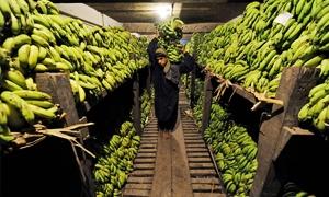 سورية تتصدر الدول العربية المستوردة للمنتجات الزراعية  اللبنانية العام الماضي .. والبطاط والموز أبرز مستورداتها